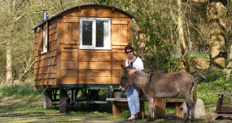 Glamping holidays in West Sussex, South East England - Waydown Shepherds Huts