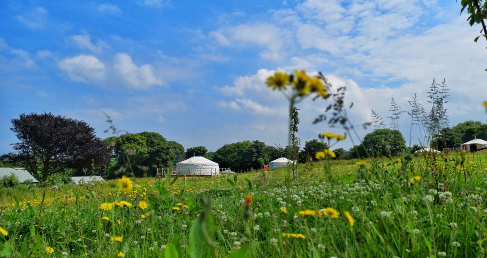 Glamping holidays in Cornwall, South West England - Real Glamping at the Fir Hill