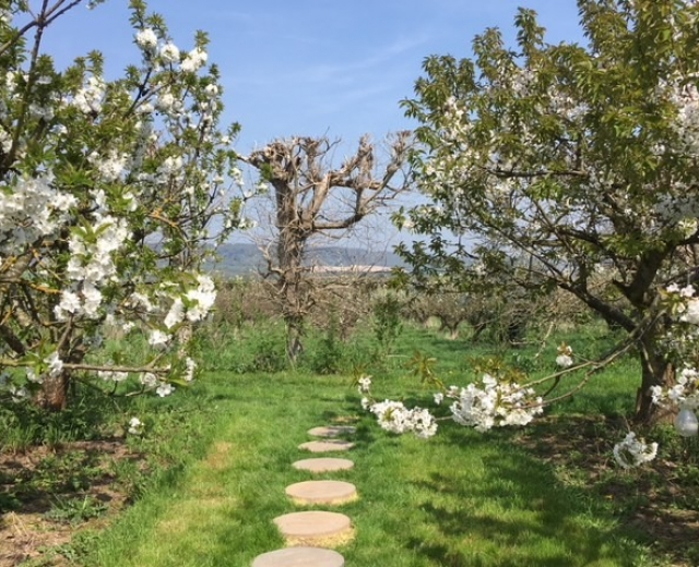 Glamping holidays in Kent, South East England - Barfield Farm Orchard Pods